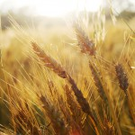 Gluten related disorders: the solution could be preventive screening